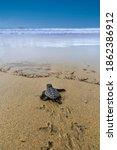 The Loggerhead Sea Turtle After ...