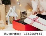 A Kitten For Present. Striped...
