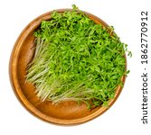garden cress sprouts in a...   Shutterstock . vector #1862770912
