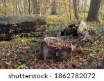 Forest In Autumn With Deadwood