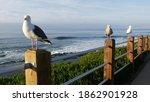 Funny Sea Gull Birds On...