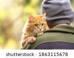 Tourist Man In A Hat Hugs A...