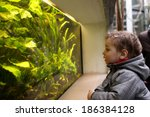 The Child Watching Fishes In An ...