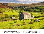 Grazing Sheep And Hay Barns ...