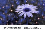Blue Flower With Rain Drops...