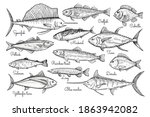 Fish Sketch Style Illustration. ...