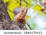 A Wild Squirrel Captured In A...