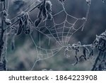 Frozen Spider Web Background...