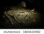 skeleton of an ancient animal... | Shutterstock . vector #1864610482