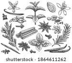 engraved spices. cardamom ... | Shutterstock .eps vector #1864611262