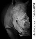 Portrait of a rhinoceros at a...
