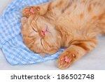 Stock photo little beige kitten sleeping on a blanket on back 186502748