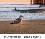 A Gull Or Cormorant Walks On...
