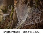Frozen Spiderweb In The Forest...