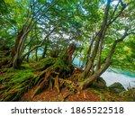 Mossy Broken Tree In Lakeside...