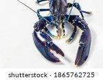 A Rare Blue Lobster...