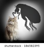 Stock photo cat and flea shadow 186582395