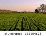 Harvest field green tilled at...