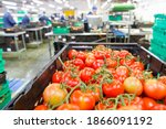 Ripe Red Vine Tomatoes In A...