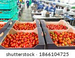 Ripe Red Vine Tomatoes Packaged ...