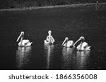 Four Beautiful Geese And Storks ...