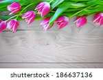 Tulips Flowers Frame And...