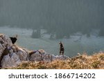 Chamois Males Standing On The...