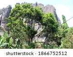 Yana caves located in Karnataka, India. Wettest, cleanest Village. Beautiful black rocks with a temple located on top surrounded by thick forests. Wonderful tree to add beauty to the caves. Trekking