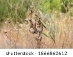 snails in the grass  fauna of... | Shutterstock . vector #1866862612