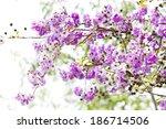 Flower Background Summer Flower