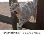 A Cat Yawning. Grey Cat Sitting ...