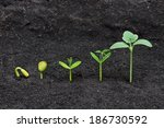Sequence Of Seed Germination O...