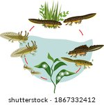 new life cycle. sequence of... | Shutterstock .eps vector #1867332412