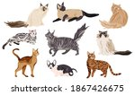 Collection Of Different Cat...