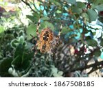 Spider Spinning Its Web In The...