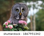 An Owl With A Bunch Of Flowers...