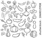 doodle vegetables. hand drawn...   Shutterstock . vector #1868015908