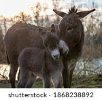 Tender Moments Of Mother Donkey ...