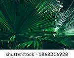 Tropical Palm Leaf  Dark Green...