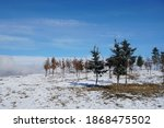 Trees In Snowy Mountain With...