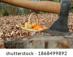 Ornamental Squashes And Gourds...