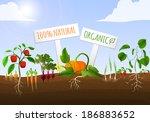 vegetable food garden poster of ... | Shutterstock .eps vector #186883652