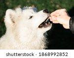 Reward Based Training  The Dog...