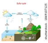 Sulfur Cycle. Biogeochemical...