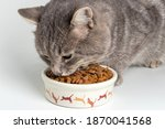 Gray Cat Eating From The Bowl....