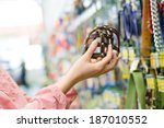 Stock photo closeup on female hands choosing stylish trendy modern muzzled for dogs on the supermarket 187010552