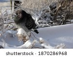 pigeon sitting on a branch in... | Shutterstock . vector #1870286968