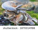Close up of a parasitic fungus...