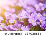 beautiful spring flowers in... | Shutterstock . vector #187035656