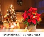 Christmas Traditional...